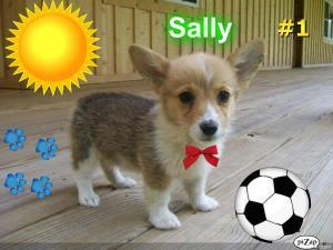 Sally-LifetimeGuarantee