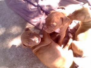 Lovingpuppies