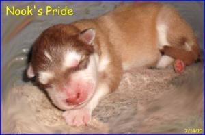 PuppiesAreHere