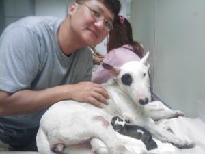 InBangkok-Puppies