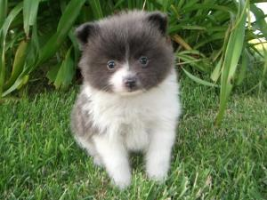 PatchesthePom