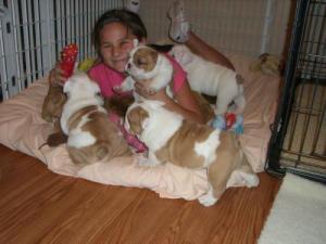 CuteAkcEnglishBulldogs