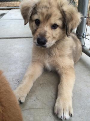 PuppiesWantedPlease